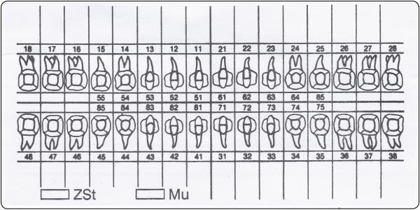 Zahnschema (50 x 100 mm)