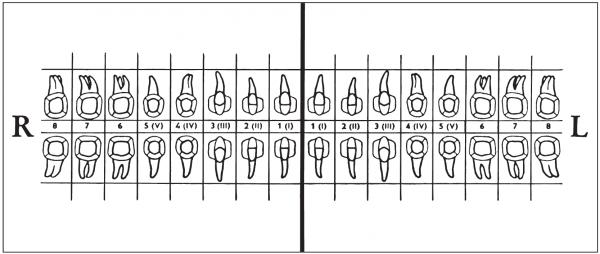 Zahnschema (60 x 140 mm)